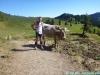 allgaeu-panorama-marathon095
