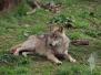 20.04.2014 - Wildpark Tambach