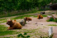 2016-06-11 - Tierpark Nuernberg