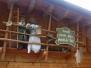 27.07.2014 - Abstieg Ehrwald