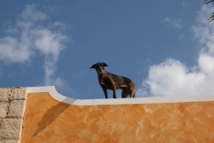 29.11.2013 - Boa Vista